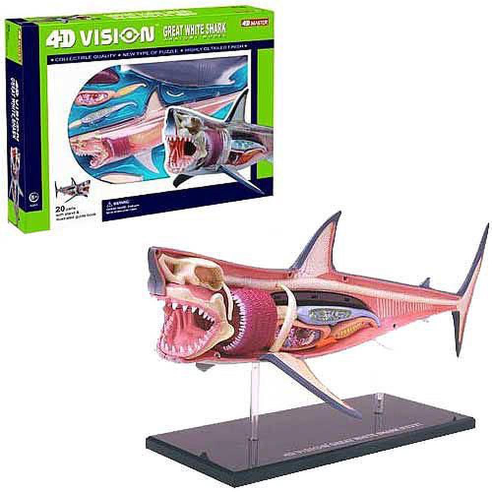 Fame Master 4D Vision Great White Shark Anatomy Model | Buy online ...