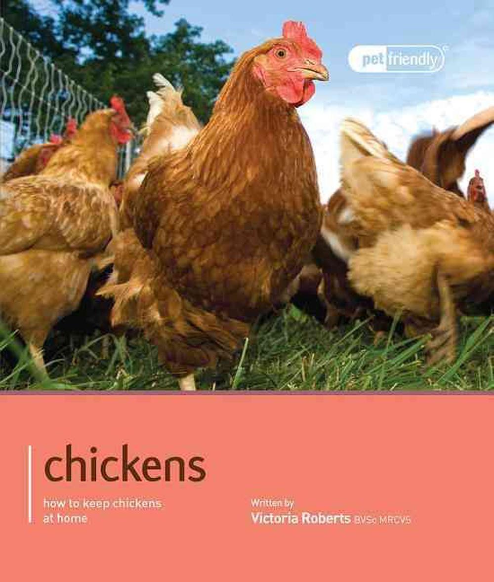 Chickens - Pet Friendly