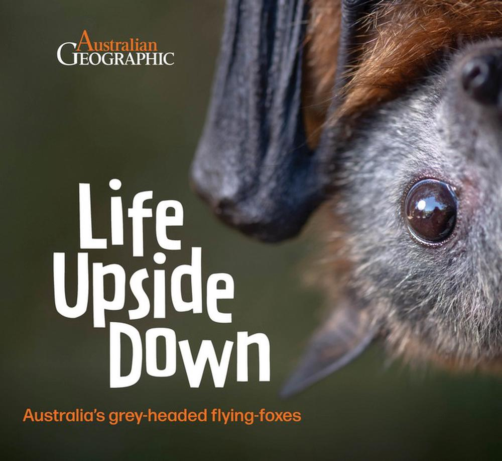 Life Upside Down: Australia's Grey-Headed Flying Foxes